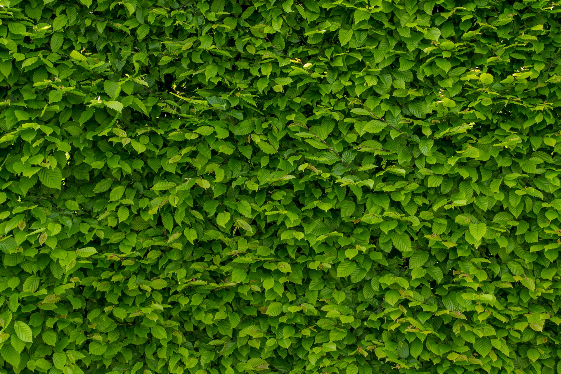 Oplossingen voor een groenere woon-/werkomgeving